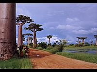 Baobab02